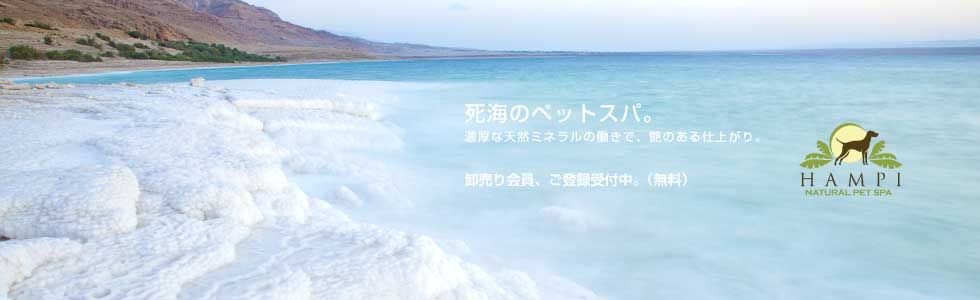 死海 犬 シャンプー