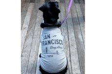 画像4: 【 California Vintage 】犬服 タンクトップ San Francisco  (4)