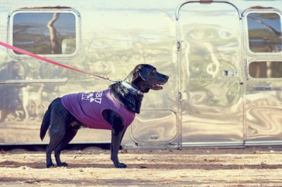 画像2: 【 California Vintage 】犬服 タンクトップ Malibu