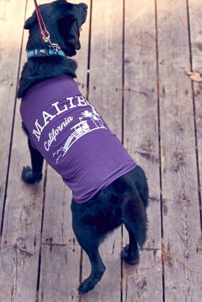 画像3: 【 California Vintage 】犬服 タンクトップ Malibu