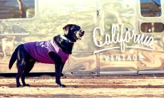 画像13: 【 California Vintage 】犬服 タンクトップ Malibu  (13)