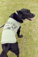 画像2: 【 California Vintage 】犬服 タンクトップ Malibu  (2)