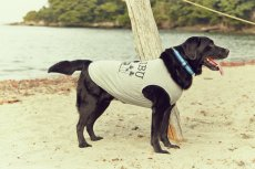 画像11: 【 California Vintage 】犬服 タンクトップ Malibu  (11)