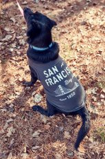 画像7: 【 California Vintage 】犬服 タンクトップ San Francisco  (7)