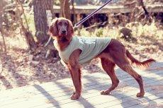 画像11: 【 California Vintage 】犬服 タンクトップ Yosemite (11)