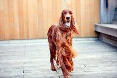 画像3: 【SALON FOR DOGS】 ミネラルコンディショナー 300ml (3)