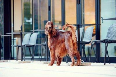 画像3: 【SALON FOR DOGS】 ミネラルコンディショナー 300ml