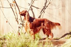画像4: 【SALON FOR DOGS】 ミネラルコンディショナー 300ml (4)