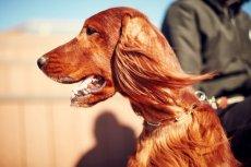 画像6: 【SALON FOR DOGS】 ミネラルコンディショナー 300ml (6)