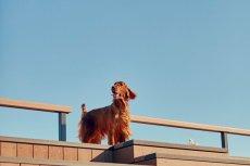 画像11: 【SALON FOR DOGS】 ミネラルコンディショナー 300ml (11)