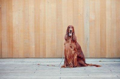 画像1: 【SALON FOR DOGS】 ミネラルコンディショナー 300ml