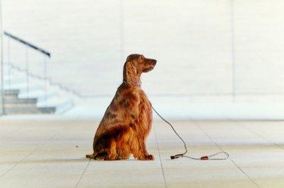 画像3: 【SALON FOR DOGS】 ミネラルセット 300ml