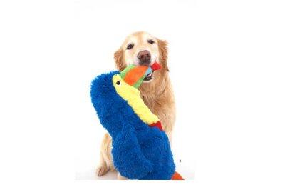画像2: 【DOGGLES】Blue Toucan