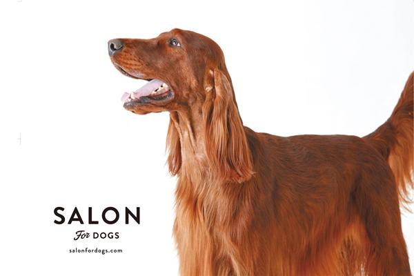 犬 シャンプー、サロン