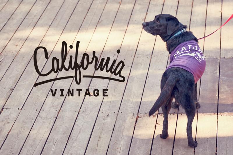 画像1: 【 California Vintage 】犬服 タンクトップ Malibu  (1)